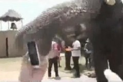 thai-elephant-eat-iphone