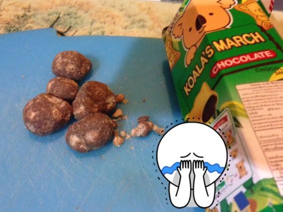 macthai-app-count-koala-march-shake-5000-time-fail