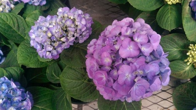 onem8purple-flowers