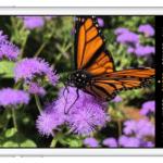 [ลือ]  iPhone 6s มีกล้องหลัง 12 ล้านพิกเซล มาพร้อมเลนส์ 5 ชิ้นและเซ็นเซอร์ใหญ่กว่าเดิม !?