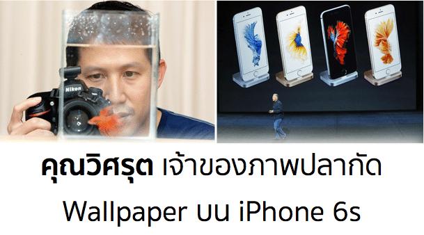 visarute-photographer-fighting-fish-iphone-6s-wallpaper