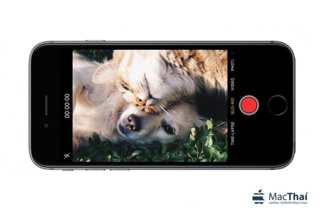 iphone_pet_video