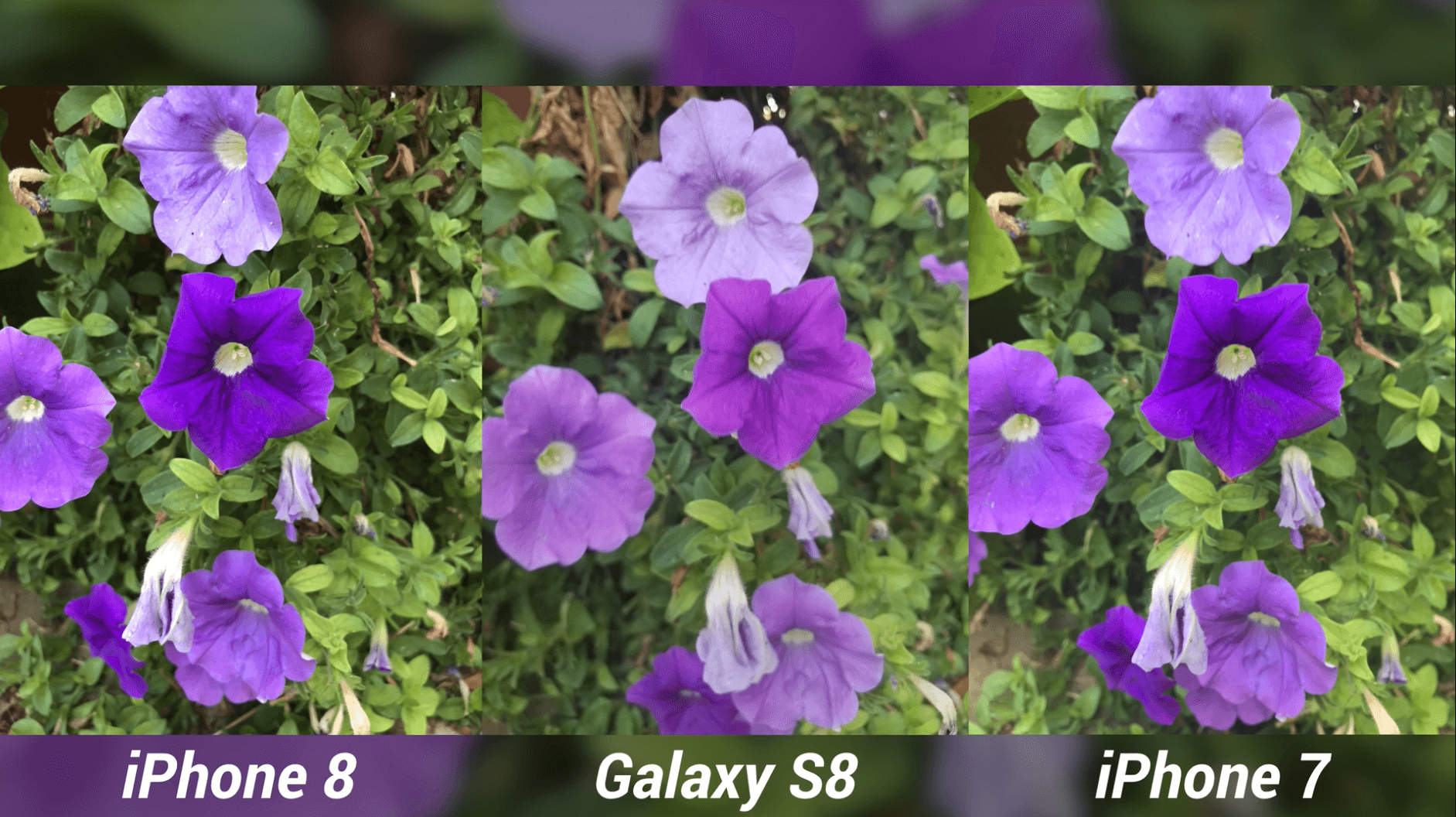iPhone 8 Camera Test vs Galaxy S8 & iPhone 7-11