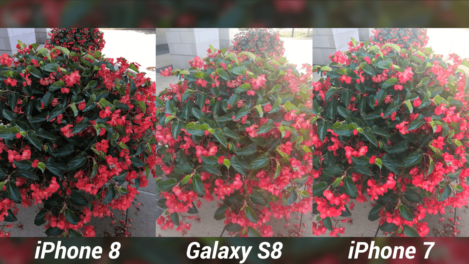 iPhone 8 Camera Test vs Galaxy S8 & iPhone 7-13