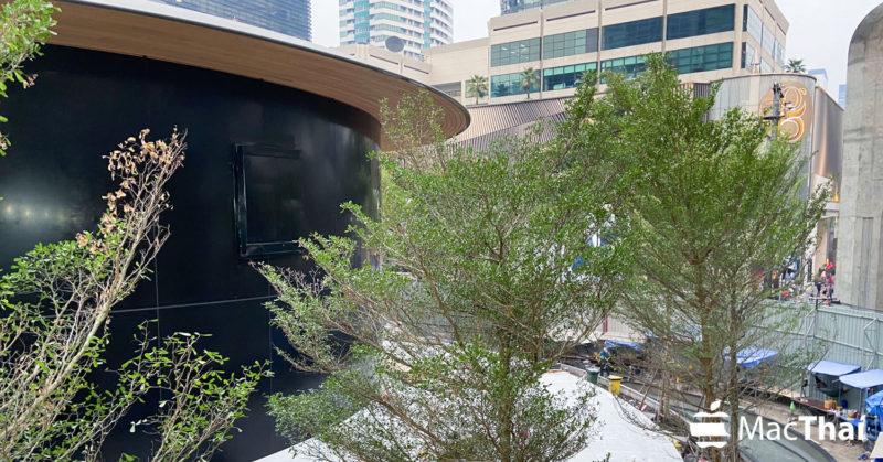 Apple Store สาขา Central World ลงต้นไม้เรียบร้อยแล้ว ดูสมบูรณ์ 70-80%
